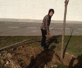 wood planting acantho